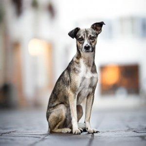 Mischlingshund in Rheinfelden Schweiz