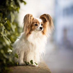 Hund sitzt auf Mauer