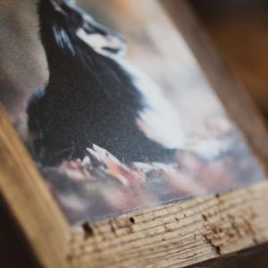 Vintage Holzrahmen mit Hundefoto